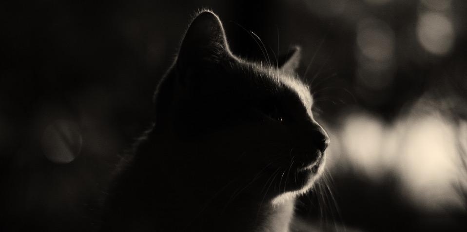 Kat in de nacht